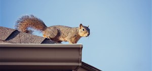 How to Stop Wildlife from Wreaking Havoc on Your Roof